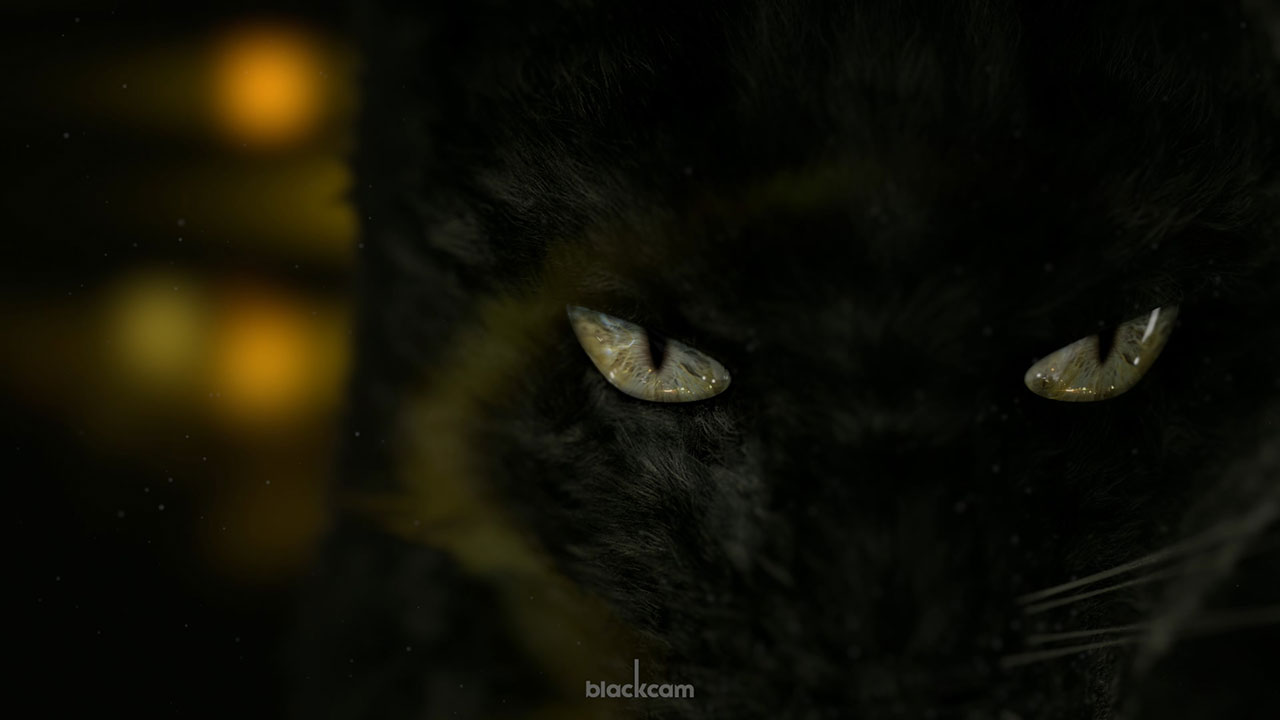 Cat_Blanding.jpg