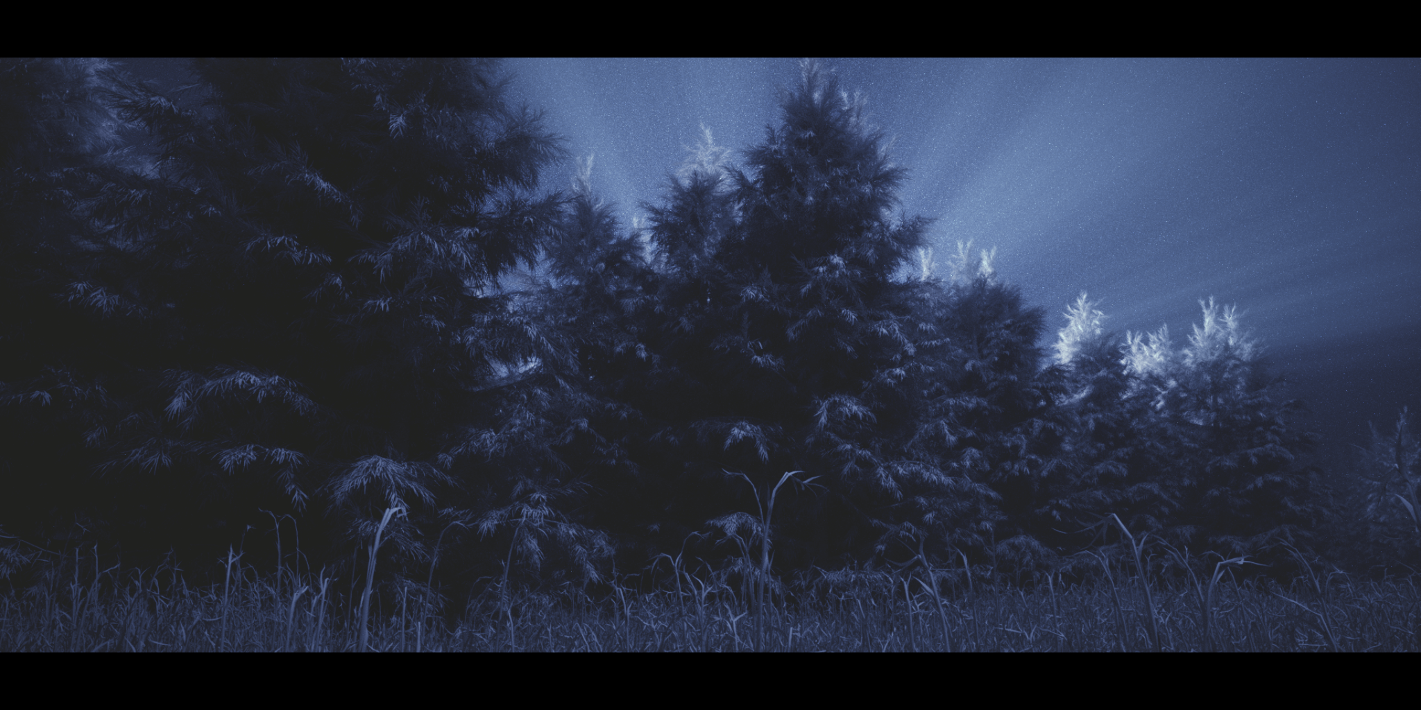p3_forest_still_3.png