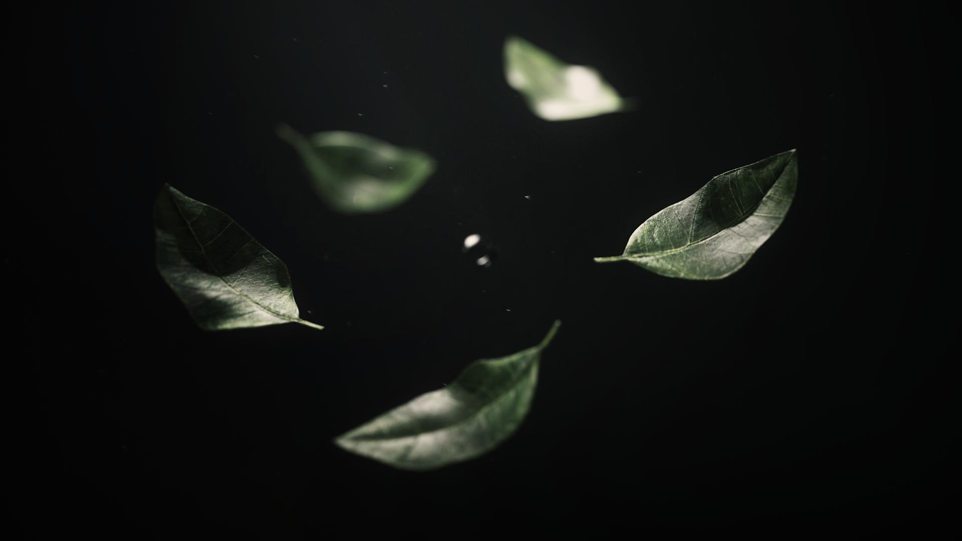 낙엽0.png