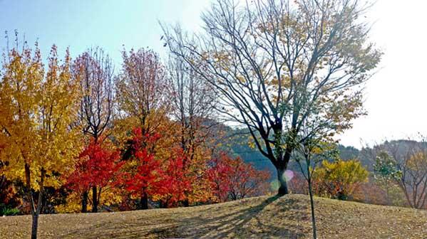 가을_평거사무실01.jpg